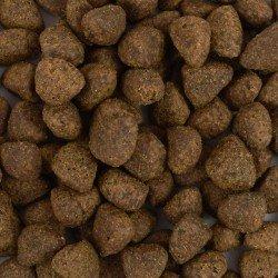 Croquettes sans céréales pour chien Agneau
