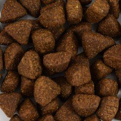 Echantillon croquettes françaises pour chien au Saumon