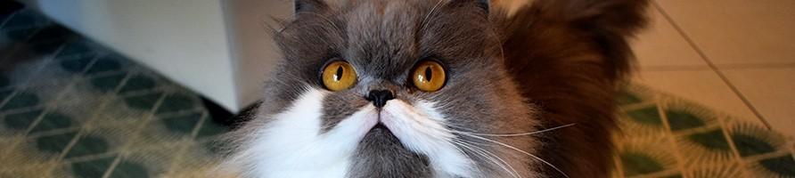 Alimentation complète fabriquée sans céréales pour chat - Atavik