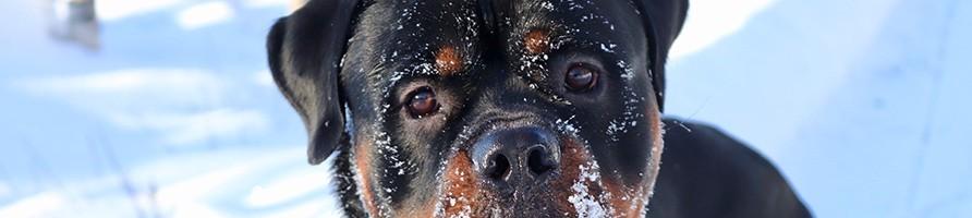 Alimentation pour chien saine et sans céréales - Atavik